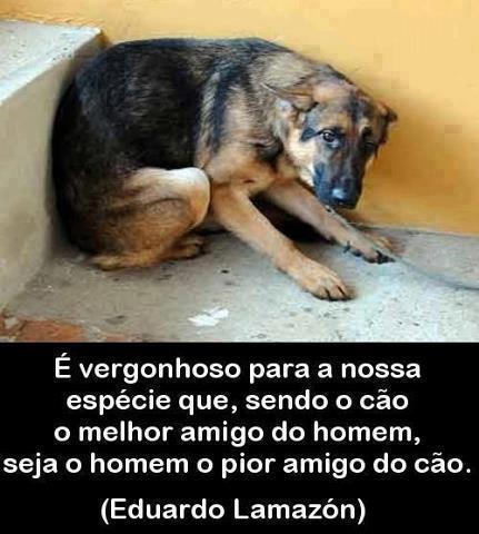 É vergonhoso que sendo o cão o melhor amigo do homem seja o homem o pior amigo do cão